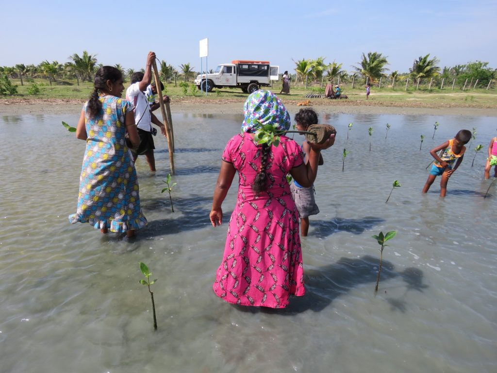 Women standing on a coastal area holding a small mangrove tree to be replanted.