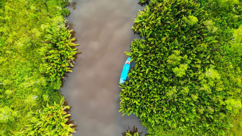 Aerial photo of mangroves