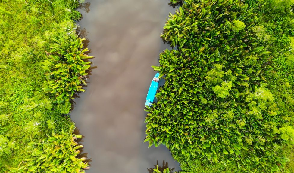 Aerial photo of mangroves