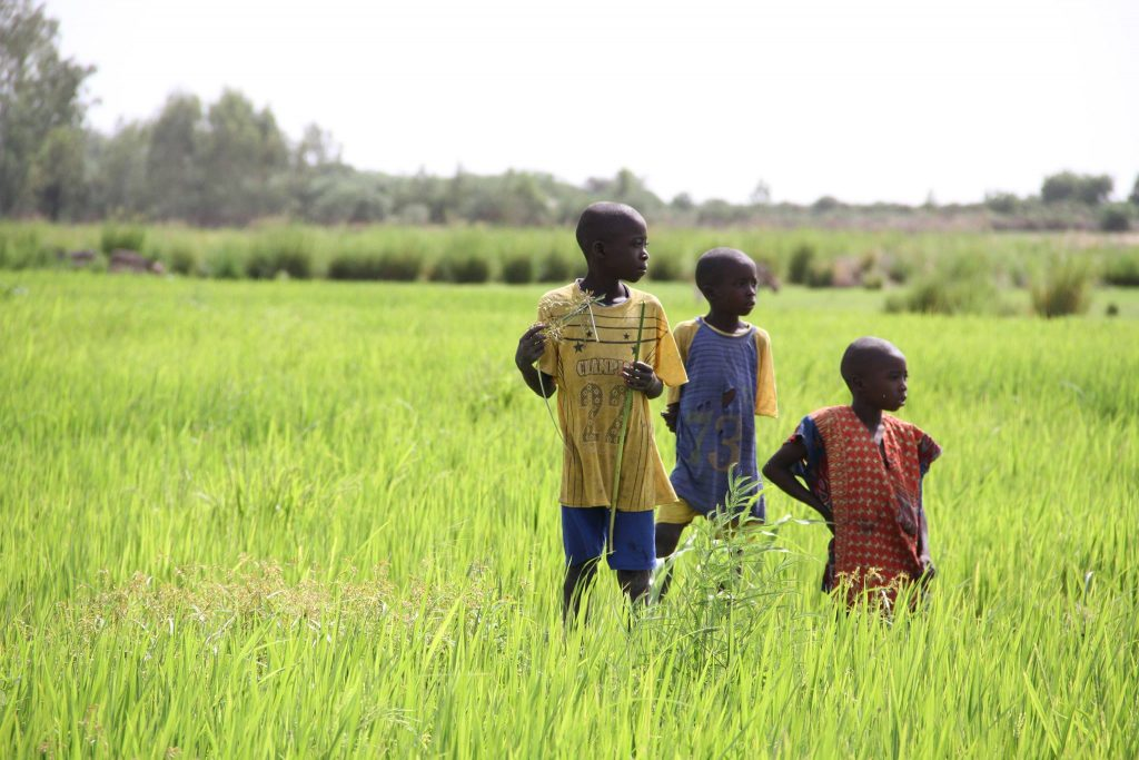 Three young boys take a break from working in their family's rice fields in Mali.