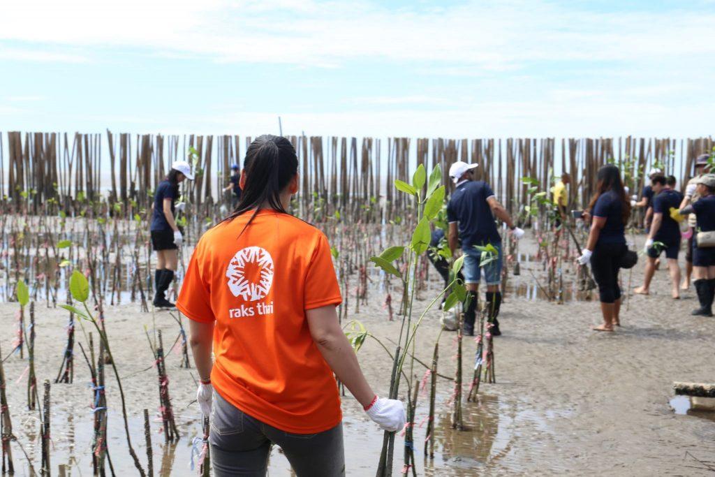 People replanting mangroves