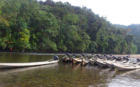 Wooden canoes on a river