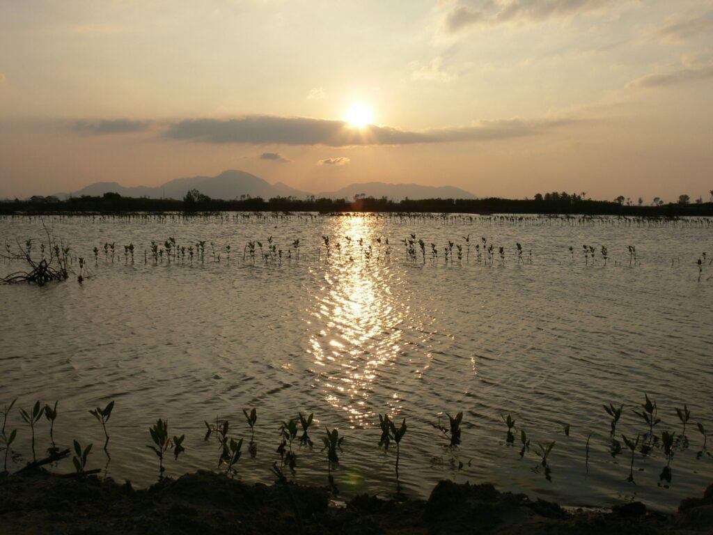 Wetland at sunset