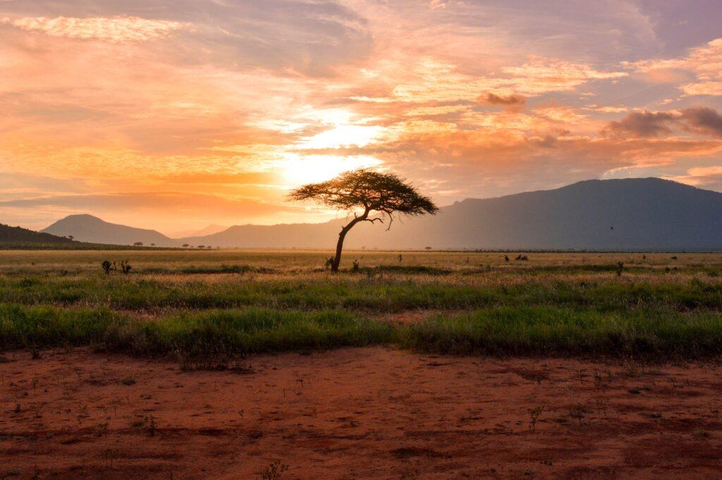 Savannah horizaon at sunrise